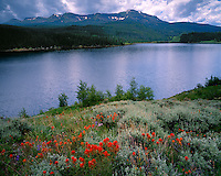 Indian Paintbrush (Casdtilleja sp.) in bloom on the shore of the Yampa Reservoir and Flat Tops Wilderness; Routt National Forest, CO