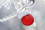 Red Christmas ball decoration hanging from a tree in the snow