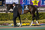 FUCHU,JAPAN-FEBRUARY 19: Epicharis walks on the parade ring before winning the Hyacinth Stakes at Tokyo Racecourse on February 19,2017 in Fuchu,Tokyo,Japan (Photo by Kaz Ishida/Eclipse Sportswire/Getty Images)