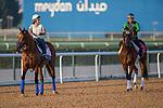 MEYDAN,DUBAI-MARCH 25: Hoppertunity(left) and Frank Conversation(right) appear the track for works at Meydan Racecourse on March 25,2016 in Meydan,Dubai (Photo by Kaz Ishida)