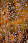 A spider web stands out in front of fall foliage on the prairie