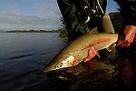 Rainbow trout release in Kulik, Alaska