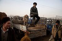 Uighur men gather around trucks at the Kashgar Sunday Animal Market outside Kashgar, Xinjiang, China.