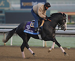 Under Review, trained by John Sadler, exercises in preparation for the upcoming Breeders Cup at Santa Anita Park on October 31, 2012.