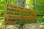 Ethan Pond Trail (Appalachian Trail) in the New Hampshire White Mountains.