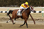Teen Pailine with Irad Ortiz, Jr.  win the 74th running of the Grade 2 Top Flight Handicap for fillies & mares, 3-year olds and up,  going 1 1/16 mile on the inner dirt, at Aqueduct Racetrack.  Trainer Todd Pletcher. Owner: Stonestreet Stables