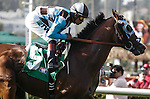 My Best Brother first time around the turf course at Del Mar Race Course in Del Mar, California on August 11, 2012.