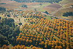 Cooper walnut orchard, California's Shenandoah Valley during autumn from the air.
