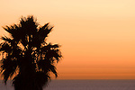Windansea, La Jolla, California; a palm tree silhouette against an orange sky over the Pacific Ocean at sunset