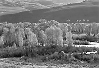 """""""Willows and Hills"""" <br /> Almont, Colorado <br /> <br /> This photograph shows willow trees and hills bathed in morning sunlight near Almont, Colorado."""