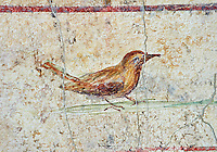 Roman Fresco of a bird from  The Large Columbarium in Villa Doria Panphilj, Rome. A columbarium is usually a type of tomb with walls lined by niches that hold urns containing the ashes of the dead.  Large columbaria were built in Rome between the end of the Republican Era and the Flavio Principality (second half of the first century AD).  Museo Nazionale Romano ( National Roman Museum), Rome, Italy.