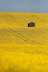 Salisbury Fields