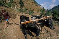 A Nepali farmer in is field in Rolpa District