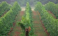Pollak vineyards in Crozet, Va. Credit Image: © Andrew Shurtleff