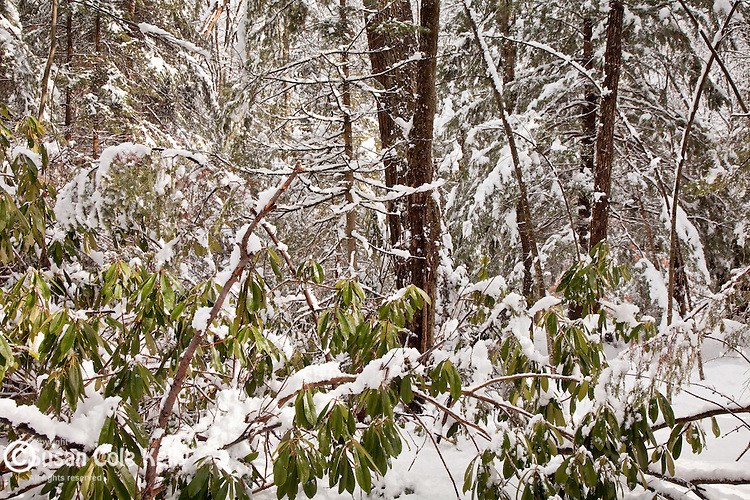 Rhododendron State Forest in Fitzwilliam, NH, USA