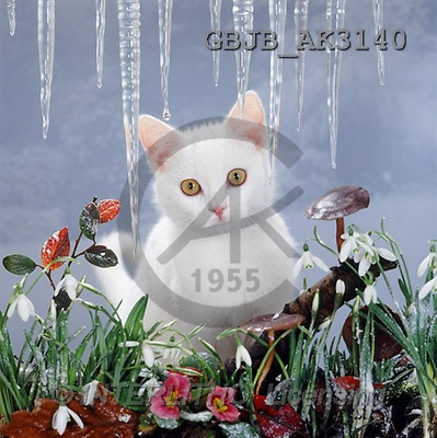Kim, CHRISTMAS ANIMALS, photos(GBJBAK3140,#XA#)