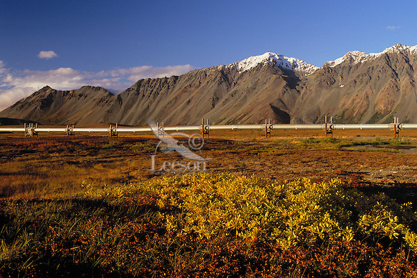 The Trans-Alaskan Oil Pipeline passing through central Alaska.  Fall.