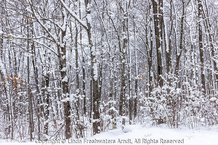 Snow-covered woodland in northern Wisconsin.