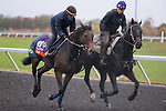 October 28, 2015:  Talmada, trained by Roger Varian and owned by Sheikh Ahmed bin Rashid al Maktoum, exercises in preparation for the Breeders' Cup Filly & Mare Turf at Keeneland Race Track in Lexington, Kentucky on October 28, 2015. Jon Durr/ESW/CSM