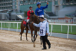DUBAI,UNITED ARAB EMIRATES-MARCH 25: Thunder Snow,ridden by Christophe Soumillon, after winning the UAE Derby at Meydan Racecourse on March 25,2017 in Dubai,United Arab Emirates (Photo by Kaz Ishida/Eclipse Sportswire/Getty Images)