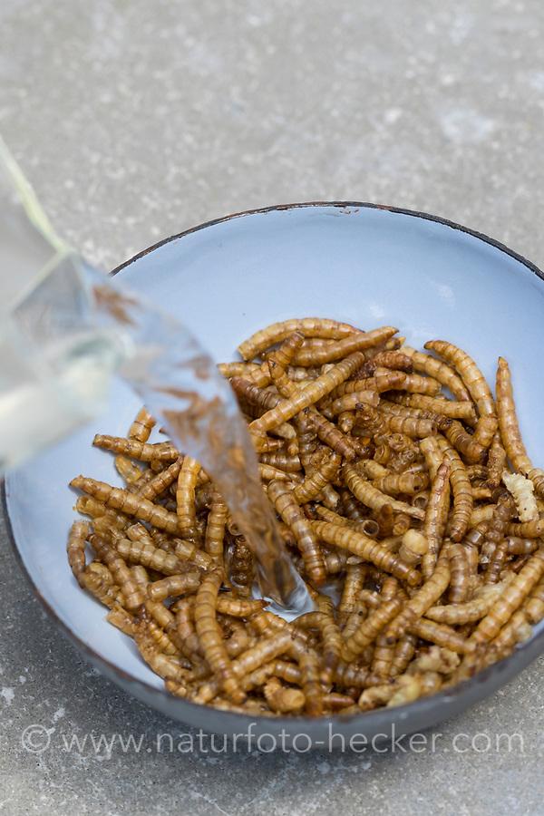 Getrocknete Mehlwürmer als Vogelfutter, zum füttern von Vögeln. Die Mehlwürmer sollten vor dem Verfüttern in Wasser eingeweicht werden