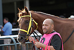 I'm Steppin' It Up in the walking ring before finishing 3rd in the 2nd running of the Smarty Jones Stakes at  Parx Racing in Bensalem, PA, on September 5, 2011.  (Joan Fairman Kanes/Eclipsesportswire).