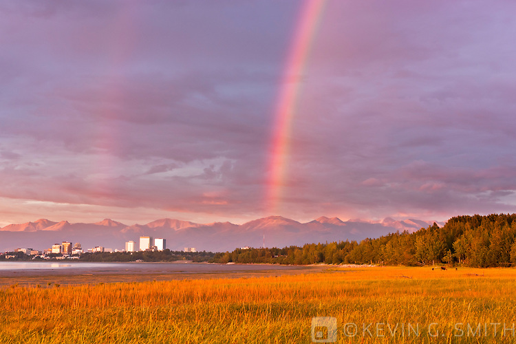 Rainbow over the Anchorage skyline, sunset light reflecting off the buildings, cow moose and two yearling calves grazing on the Knik Arm coastal mudflats, alpenglow on the Chugach mountains in the background, Anchorage, Southcentral Alaska, Summer.