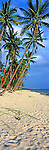 Beach on the Coral Coast, Fiji Islands<br /> <br /> Image taken on large format panoramic 6cm x 17cm transparency. Available for licencing and printing. email us at contact@widescenes.com for pricing.