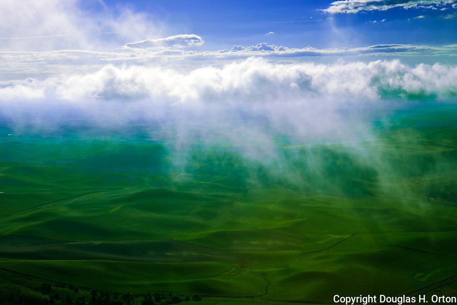 The summit of Steptoe Butte looms 1000 feet over surrounding farmland.  Here, early morning fog burns off as the sun rises.  Steptoe Butte stands tall above the Palouse in Washington State.  Steptoe Butte is a quartzite island jutting up from sediment left by the ice age Missoula flood that formed the Palouse.   Cow Parsnip often flanks bordering roads in spring.