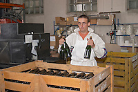 In the winery: bottles of brut champagne that have just been disgorged and re-corked stacked in a wooden crate by a winery worker, Champagne Larmandier-Bernier, Vertus, Cote des Blancs, Champagne, Marne, Ardennes, France