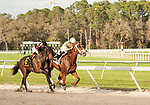 TAMPA, FL - February 10: Flameaway, #2, with Jose Lezcano in the irons, battles Catholic Boy, #6 and Manuel Franco down the stretch in the Sam F Davis Stakes (Grade III) at Tampa Bay Downs on February 10, 2018 in Tampa, FL. (Photo by Carson Dennis/Eclipse Sportswire/Getty Images.)