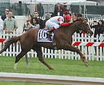 Redwood Kitten (no. 10), ridden by Joel Rosario and trained by Wesley Ward, wins the James W. Murphy Stakes for three year olds on May 18, 2013 at Pimlico Race Course in Baltimore, Maryland  (Bob Mayberger/Eclipse Sportswire)