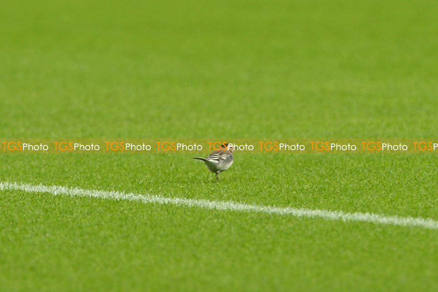 Bird on the pitch General view of the London Stadium during West Ham United vs Newcastle United, Premier League Football at The London Stadium on 12th September 2020