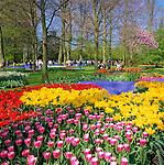 Netherlands, South Holland, near Lisse: Keukenhof also known as the Garden of Europe,  the world's largest flower garden | Niederlande, Suedholland, bei Lisse: hollaendische Parkanlage Keukenhof, ein Touristenmagnet zur Zeit der Tulpenbluete