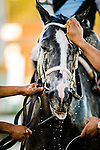 OLDSMAR, FL - MARCH 11: Tapwrit #5, ridden by Jose Ortiz, receives a bath after wining the Tampa Bay Derby on Tampa Bay Derby Day at the Tampa Bay Downs on  March 11, 2017 in Oldsmar, Florida. (Photo by Douglas DeFelice/Eclipse Sportswire/Getty Images)