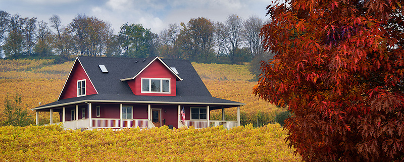 Sokol Blosser Vineyards in fall color and house. Oregon