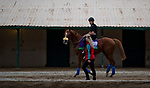 DEL MAR, CA - NOVEMBER 01: Horses walk by the barns during morning workouts at Del Mar Thoroughbred Club on November 1, 2017 in Del Mar, California. (Photo by Scott Serio/Eclipse Sportswire/Breeders Cup)