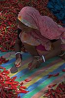 Chilis at the Varanasi open Market