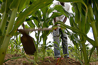 21 year old Mncedisi works a field of maize..