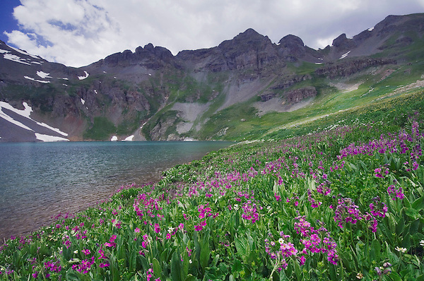 Clear Lake with wildflowers in alpine meadow, Parry's Primrose,Primula parryi, Ouray, San Juan Mountains, Rocky Mountains, Colorado, USA, July 2007