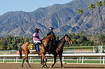 ARCADIA, CA FEBRUARY 6:  #6 Concert Tour, ridden by Joel Rosario, in the post parade of the San Vicente Stakes (Grade ll) on February 6, 2021, at Santa Anita Park in Arcadia, CA.  (Photo by Casey Phillips/EclipseSportswire/CSM)
