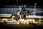 ARCADIA, CA - OCTOBER 29: Carina Mia, owned by Three Chimneys Farm LLC and trained by William I. Mott, exercises in preparation for the Breeders' Cup Filly & Mare Sprint at Santa Anita Park on October 29, 2016 in Arcadia, California. (Photo by Alex Evers/Eclipse Sportswire/Getty Images)