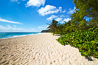 Deserted, white sand Miami Beach with lush, vivid green vegetation and coconut trees, under a blue sky with white clouds, Barbados Island