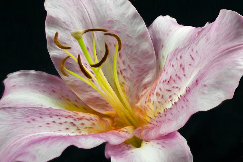Tiger lily close uptiger lily,