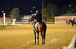 LOUISVILLE, KY -APR 25: Chocolate Martini on to the track to work out for the Kentucky Oaks at Churchill Downs, Louisville, Kentucky. (Photo by Mary M. Meek/Eclipse Sportswire/Getty Images)