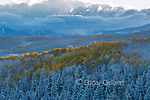 Clearing Storm, Aspen, Wilson Mesa, Uncompahgre National Forest, Colorado