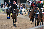 LOUISVILLE, KY - MAY 3: The Coolmore horses, starring Mendelssohn, in the yellow saddle cloth,trained by Aidan O'Brien at Churchill Downs on May 3, 2018 in Louisville, Kentucky. (Photo by Eric Patterson/Eclipse Sportswire/Getty Images)
