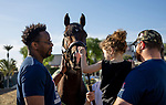 OCT 30: Omaha Beach is greeted by Homes for Our Troops guests during morning training at Santa Anita Park in Arcadia, California on Oct 30, 2019. Evers/Eclipse Sportswire/Breeders' Cup