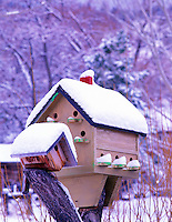 F00093M.tiff   Birdhouse with snow. Summer Lake Inn. Oregon