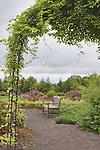 Fiveleaf Akebia on Arbor.  Garden Bench.  Oregon Gardens.  Oregon Gardens, Silverton, Oregon, USA, an 80 acre botanical garden in the Willamette Valley.  Windy day.